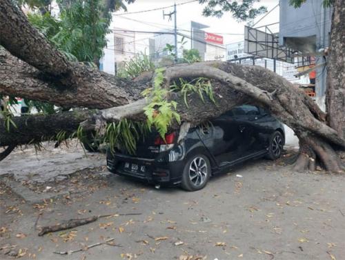 Diduga Karena Getaran Pengerjaan Proyek HK di Jalan Ahmad Yani Pekanbaru, Satu Pohon Tumbang dan Timpa 3 Unit Mobil Warga