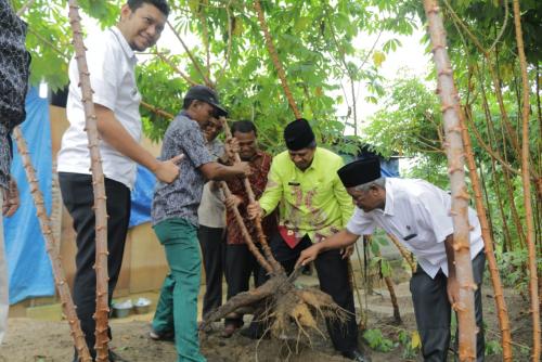 Hasilkan Rp100 Juta Setiap Panen, Petani di Minas Mulai Beralih Tanam Singkong